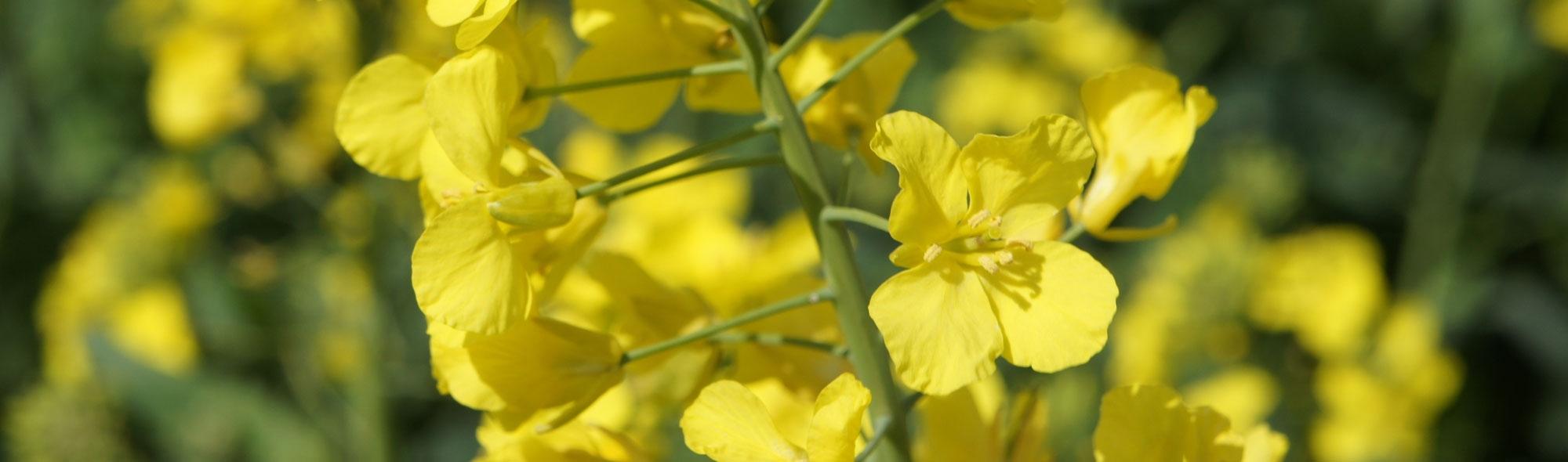 yellow-94447.jpg