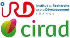 Logo CIRAD IRD