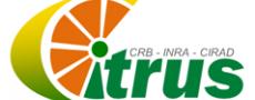 logo_crb_citrus.png